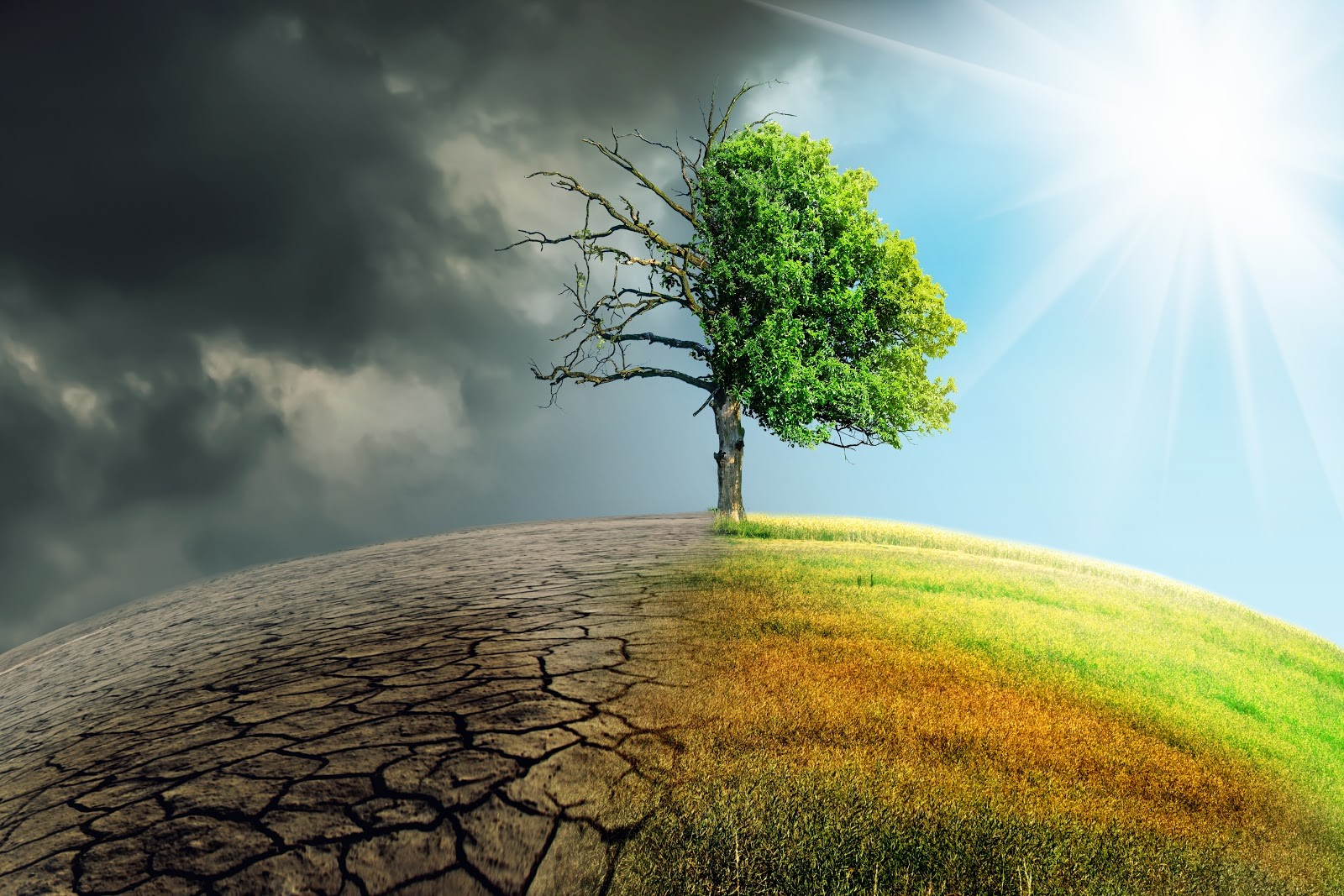 CLIMATE CHANGE CONTRIBUTING TO NEED FOR BETTER ROOF MATERIALS